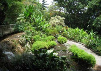 Au gré des allées du jardin botanique de Deshaies, Guadeloupe