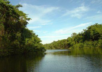 Mangrove de la Rivière Salée, Guadeloupe