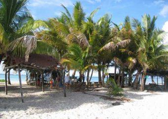 Cocotiers et plage de l'Ilet Caret, Guadeloupe