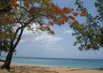 Vue sur la baie de Grande Anse, Deshaies